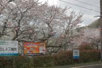 070403sakura.JPG